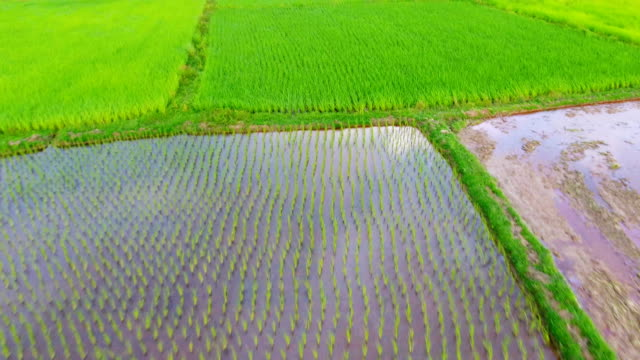 Panoramic view nature Landscape of a green field with rice Panoramic view nature Landscape of a green field with rice at sunset 天の川 stock videos & royalty-free footage