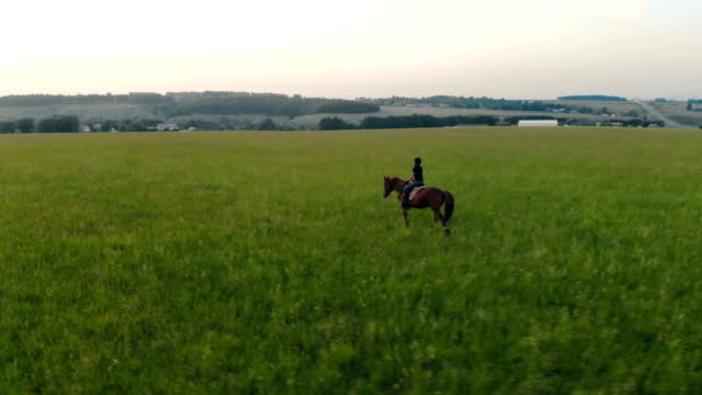 Panoramic view of a field with a female equestrian riding a stallion