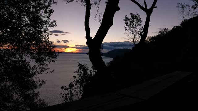 Panoramic view of the bay at sunrise with the shadows of the plants