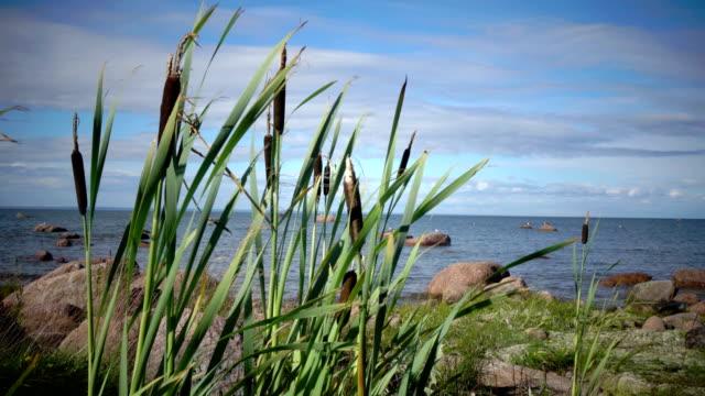 vídeos de stock e filmes b-roll de panoramic view of the stony coast of the gulf of finland in sunny summer day - países nórdicos