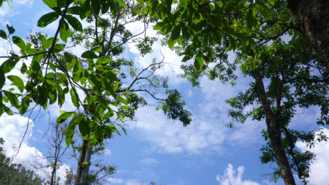 Panoramic view of the trees and sky video
