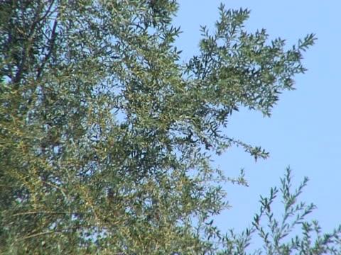 パノラミカ arboles 2 - 熟していない点の映像素材/bロール