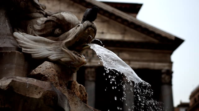 Pantheon in Rome,  Piazza della Rotonda Fountain and Pigeon video