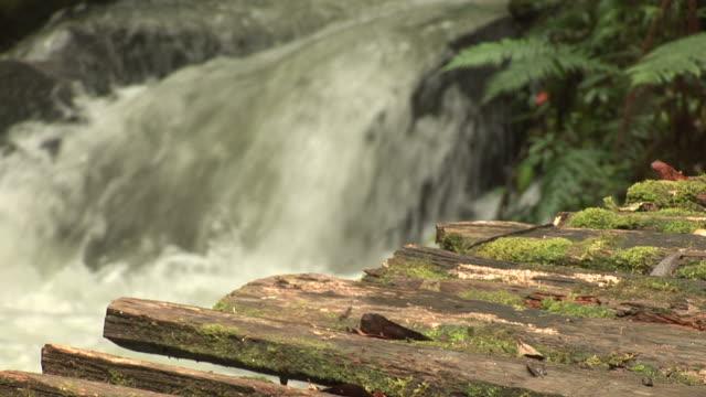 Papa New Guinea River video