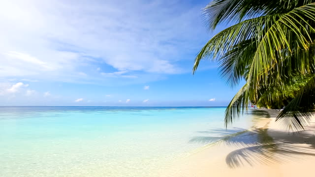 Paradise Beach tropical beach with palm trees and turquoise blue water - sounds of splashing waves idyllic stock videos & royalty-free footage