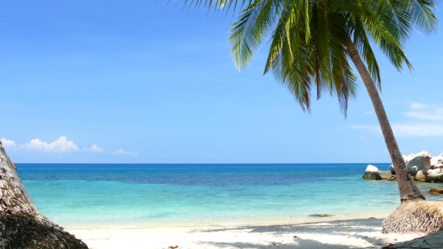 raj plaży z niebieski turkusowe morze i palma kokosowa - palm tree filmów i materiałów b-roll