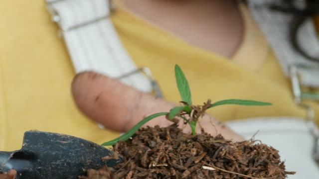 genitore che insegna al bambino la biologia, la coltivazione di piante in serra a casa, il concetto di homeschooling - gardening video stock e b–roll