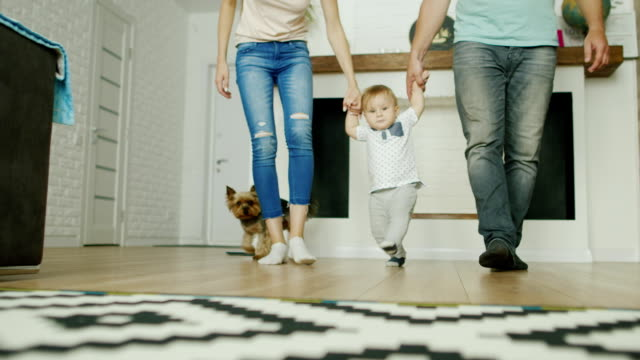 Parents are taught to walk a little boy at home. They hold his hands on both sides. Their dog runs alongside video