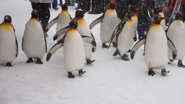 Pariade penguin video