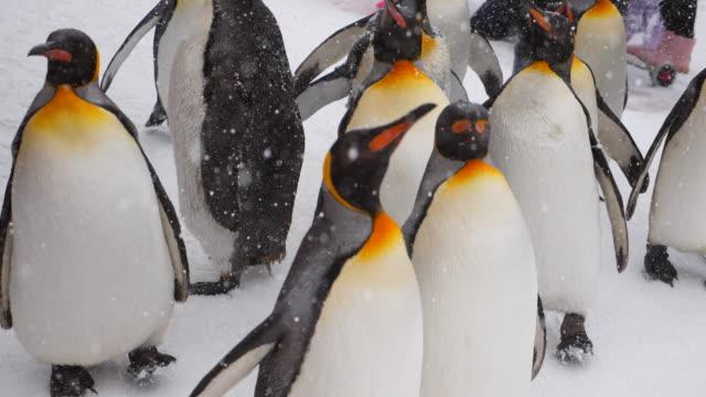 pariade penguin - antarktyda filmów i materiałów b-roll
