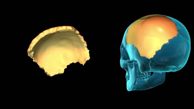 Parietal Bone video