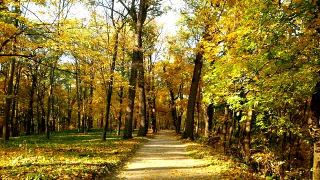 Park autumn forest sun video