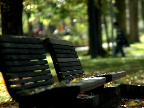 ntsc-park bench autunno - parte della pianta video stock e b–roll
