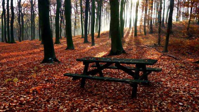 Park Bench In Autumn Forest video