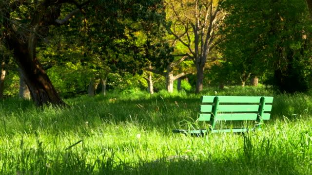 park bench feld frühlingslandschaft, hohen grünen rasen und stadtpark - grundstück stock-videos und b-roll-filmmaterial