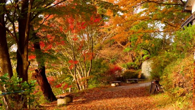 カエデの木の公園。秋の風景の風の強い日。 - 秋点の映像素材/bロール