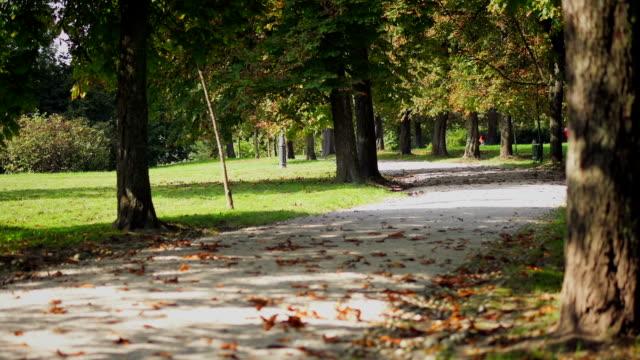vidéos et rushes de parc sur une belle journée d'automne chaude et - inclinaison vers le haut