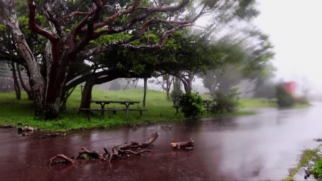 vídeos y material grabado en eventos de stock de paisaje del parque donde el viento y la lluvia son soplados por un tifón - lluvia torrencial
