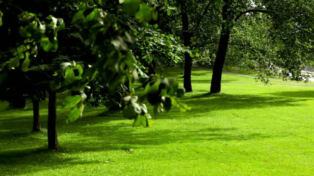 Park with green lawn. video