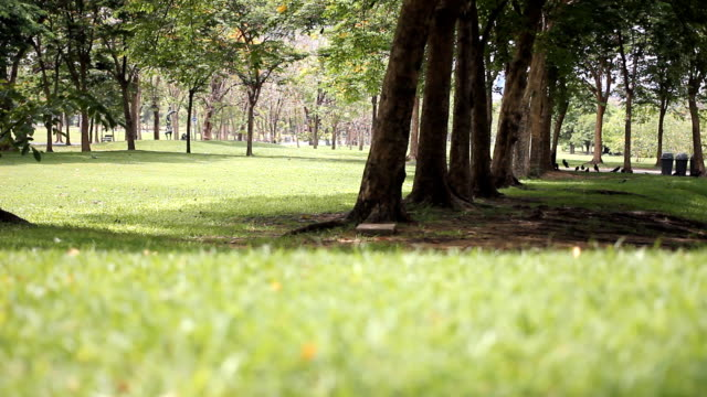 HD: Park with green lawn. video