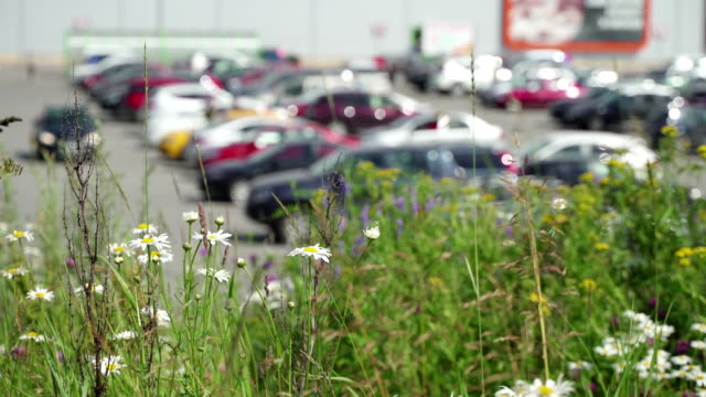 vídeos de stock e filmes b-roll de parking concept and street signs. blur parking next modern shopping mall at peak hour. cars leave parking lot, sales retail, season sales. wildflowers in front of parking. contrast nature and man - granadilha