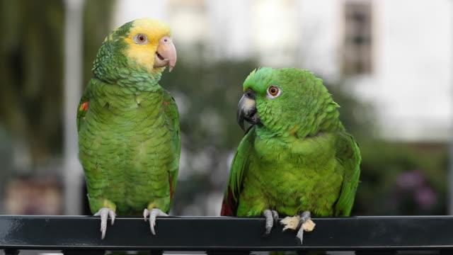 parrot diskussion - gespräch stock-videos und b-roll-filmmaterial