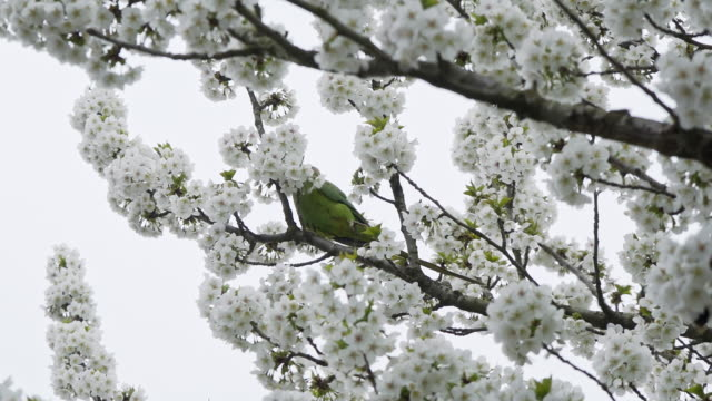 Parrot eating flowers