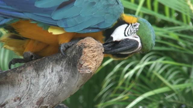 vidéos et rushes de perroquet dans une nuance 4-hd 60i - partie du corps d'un animal