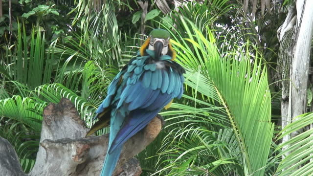 Parrot in a shade 5 - HD 60i Colorful parrot grooming 笹 stock videos & royalty-free footage