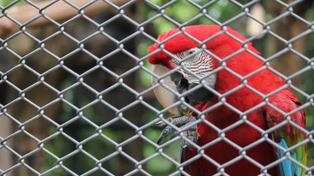 vidéos et rushes de parrot en cage - apprivoisé