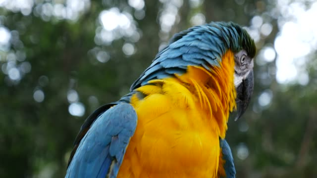 Parrot Macaw on nature background video