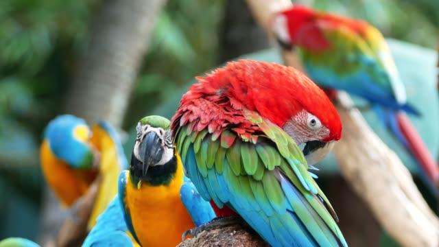 4k 鸚鵡在樹上 - 野生動物 個影片檔及 b 捲影像