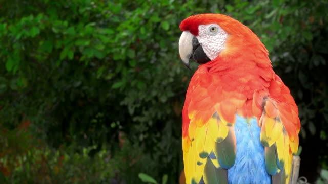 ara pappagallo - portorico video stock e b–roll