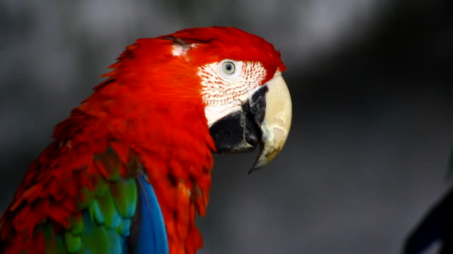 Parrot, Macaw video