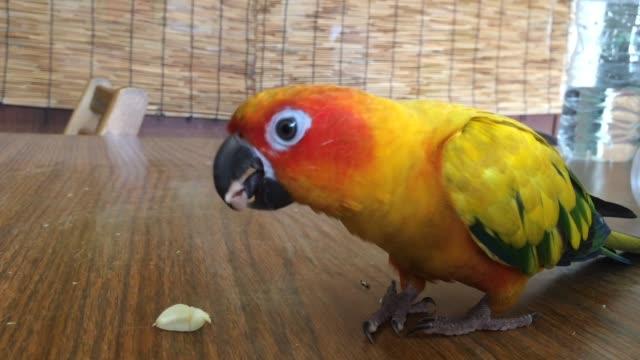 vidéos et rushes de perroquet. - apprivoisé