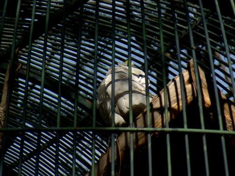 parrot  - aquarium oder zoo stock-videos und b-roll-filmmaterial