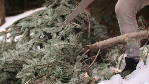 Part of man cutting the Christmas tree Part of man cutting the Christmas tree christmas tree stock videos & royalty-free footage