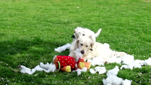 stockvideo's en b-roll-footage met partners in crime. comp of dogs having mischievous fun - speelgoed