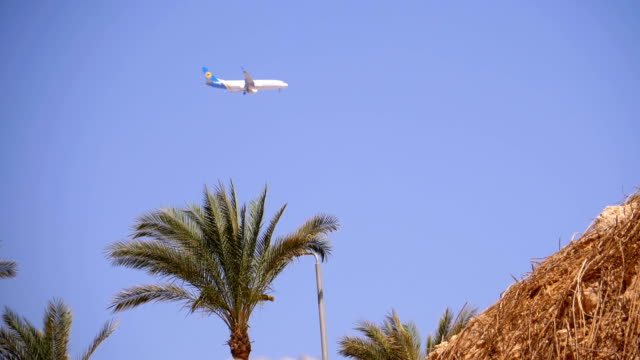passenger plane in sky landing on background of mountains and palm trees in egypt - ukraina filmów i materiałów b-roll