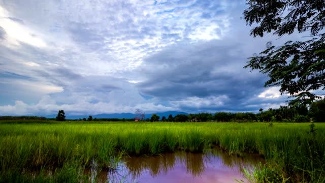 田んぼの曇り空の夕暮れに渡す雲 - 水田点の映像素材/bロール