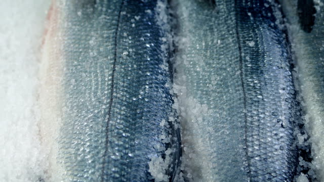 Passing Fish Display In Ice Tracking shot moving slowly past fishes on ice freezer stock videos & royalty-free footage