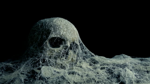 Passing Old Skull Under Cobwebs In Tomb Or Cave Passing a dusty skull covered in cobwebs in a dark tomb or cave skull stock videos & royalty-free footage
