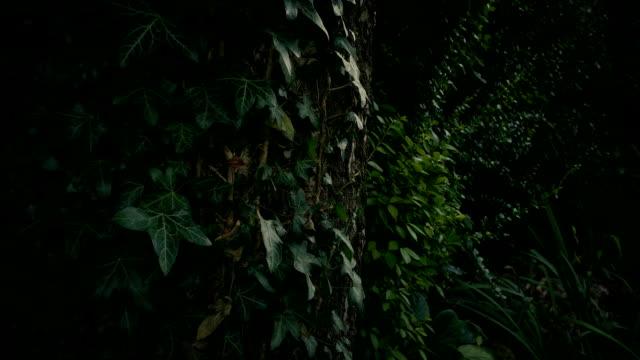 아이비에 덮여 오래된 나무를 통과 - 아이비 스톡 비디오 및 b-롤 화면