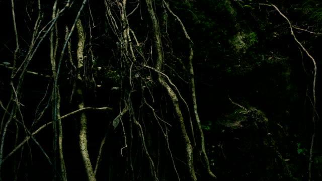 vidéos et rushes de racines d'arbre de passage - racine partie d'une plante