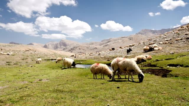 pastoral scene at taurus mountains turkey time lapse - anatolien bildbanksvideor och videomaterial från bakom kulisserna
