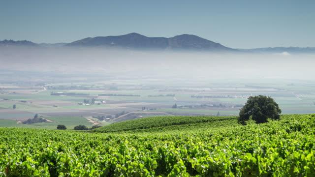vidéos et rushes de mosaïque de vignobles en californie wine country - time lapse - vallée