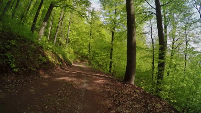 vidéos et rushes de un chemin dans la forêt au printemps - randonnée équestre