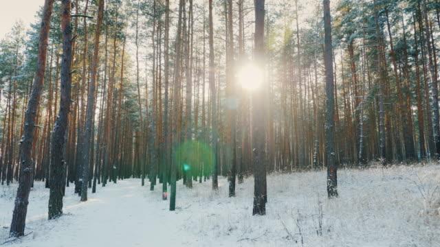 path in the winter forest, the sun shines through the trees. pov steadicam shot - perfezione video stock e b–roll