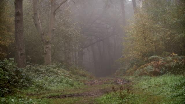 Path Through Autumn Woodland On A Misty Morning video
