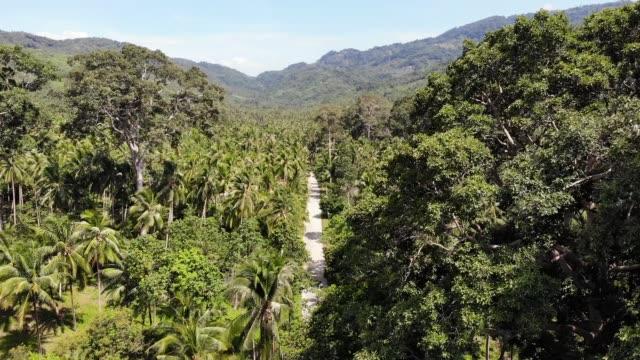 ココナッツプランテーションを通る道。タイのサムイ島の晴れた日にココナッツヤシを通る道路。楽園の山の風景のドローンビュー。緑の中を飛ぶ。森林 伐採。 - サムイ島点の映像素材/bロール